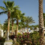 l_egypt_hotel_coral_beach_15.jpg